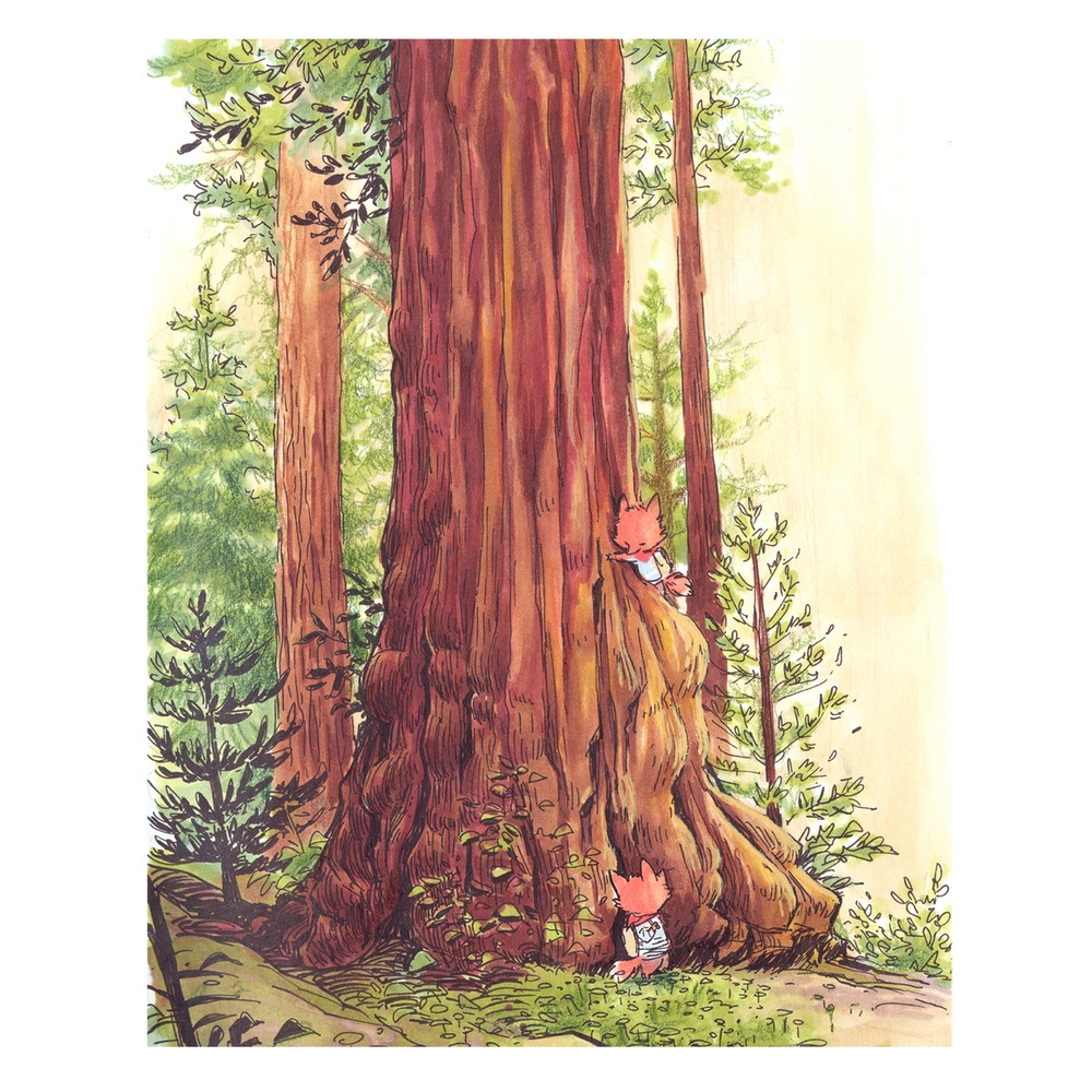 weeprint_sequoia_8x10_01
